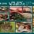 """Schildkröten, Schlangen, Spinne . Foto Openair """"Wildlife - Tierpark Suhl"""" 2018 (Fotos: Brigitte Günkel, Heidi Günther, Manuela Hahnebach, Jana Heinbürge, Silke Maruhn, Gerd Ritzmann, Peter Sokolowski)"""