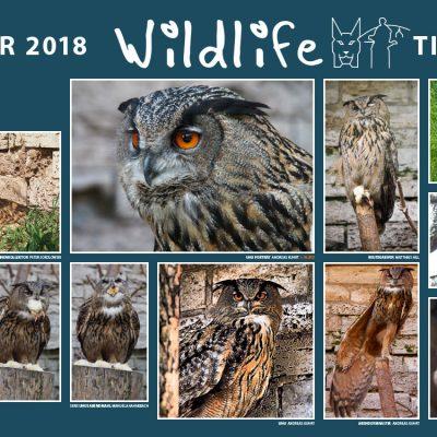 "Uhu, Sperlingskauz . Foto Openair ""Wildlife - Tierpark Suhl"" 2018 (Fotos: Manuela Habelt, Manuela Hahnebach, Matthias Hill, Andreas Kuhrt, Peter Sokolowski)"
